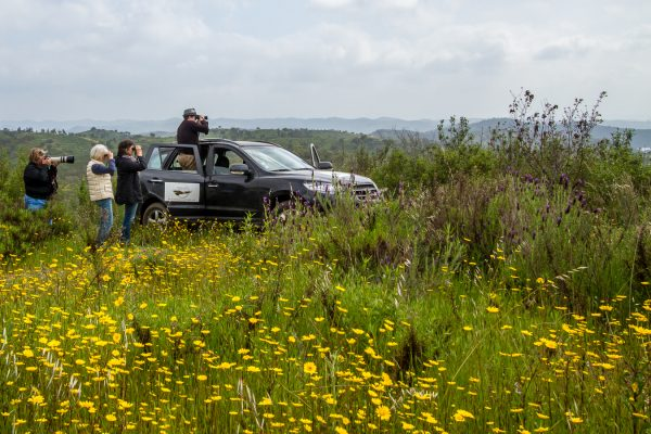 Birding in Portugal is based in southern Portugal, and we offer beautiful bird-friendly accommodation,
